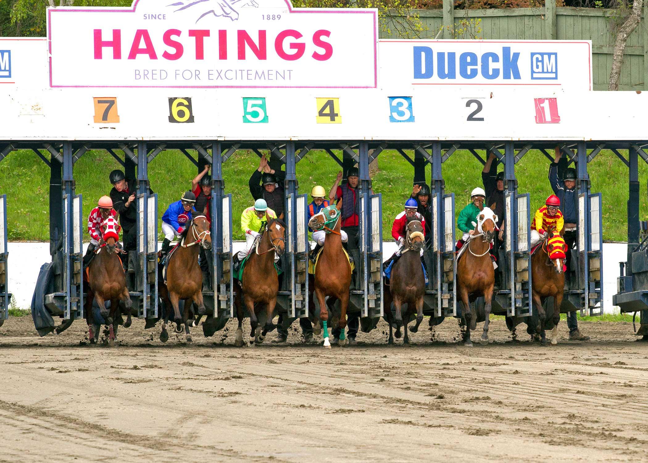 Stats - Hastings Racecourse